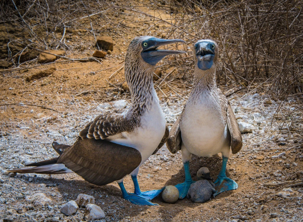 Galapagos Islands 2018 -Part I:  Here come the Boobies!