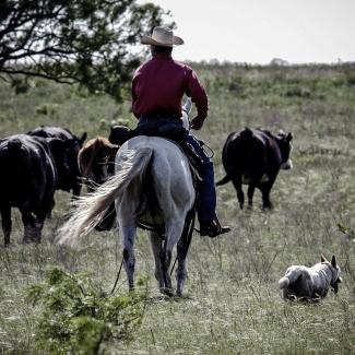 Western Lifestyle image